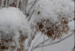 Apie sniegą ir žiemos darbų prasmę