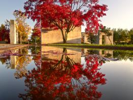 Medžių muziejus- Šveicarija