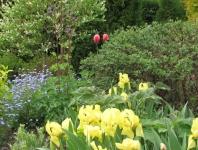 Pavasario dvelksmas.JPG