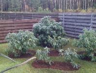 Rododendrų kampelis.jpg