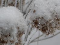 sniegas_2.jpg
